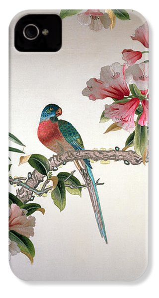 Jay On A Flowering Branch IPhone 4 / 4s Case by Chinese School