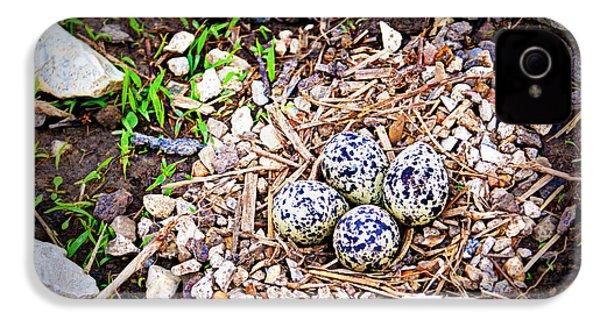 Killdeer Nest IPhone 4 Case by Cricket Hackmann
