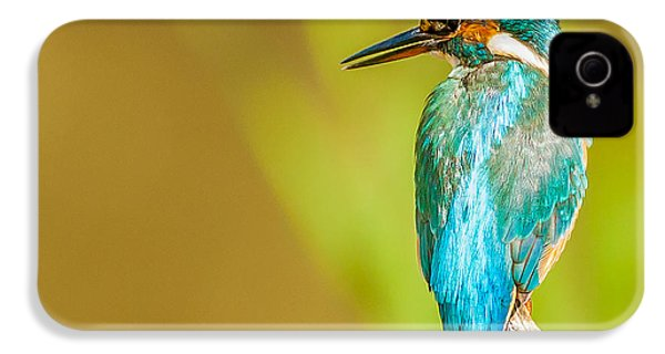 Kingfisher IPhone 4 / 4s Case by Paul Neville