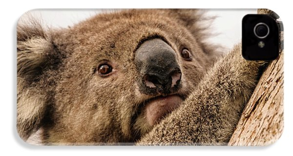 Koala 3 IPhone 4 Case by Werner Padarin