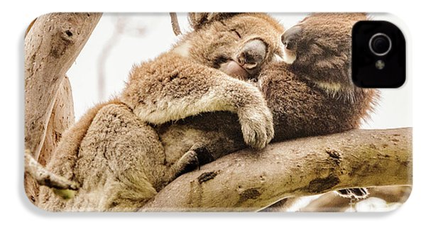 Koala 5 IPhone 4 Case by Werner Padarin
