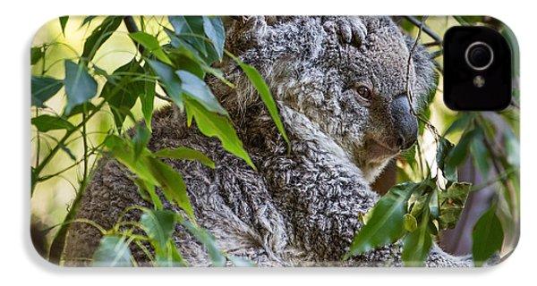 Koala Joey IPhone 4 Case