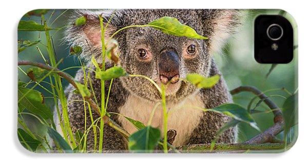 Koala Leaves IPhone 4 Case