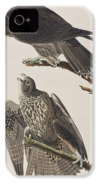 Labrador Falcon IPhone 4 Case by John James Audubon