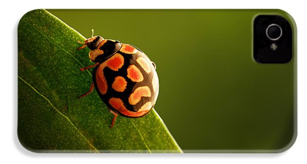 Ladybug  On Green Leaf IPhone 4 Case