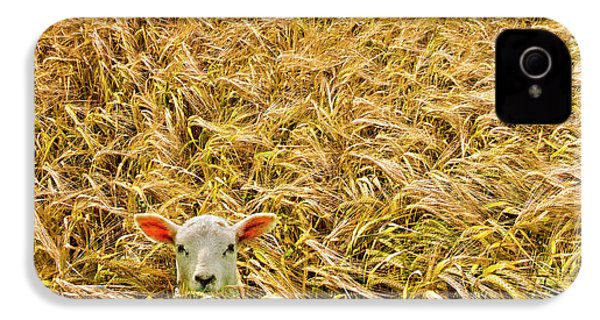 Lamb With Barley IPhone 4 / 4s Case by Meirion Matthias