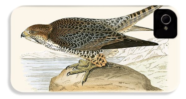 Lanner Falcon IPhone 4 Case by English School