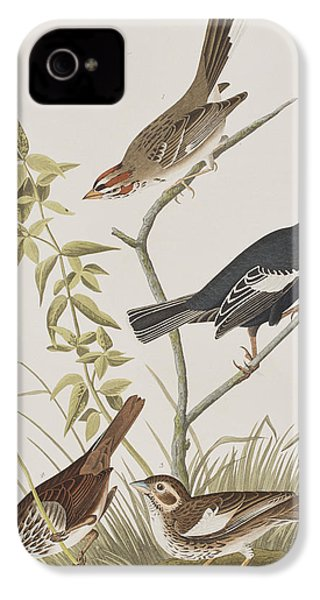 Lark Finch Prairie Finch Brown Song Sparrow IPhone 4 Case