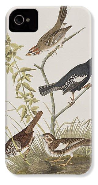 Lark Finch Prairie Finch Brown Song Sparrow IPhone 4 / 4s Case by John James Audubon
