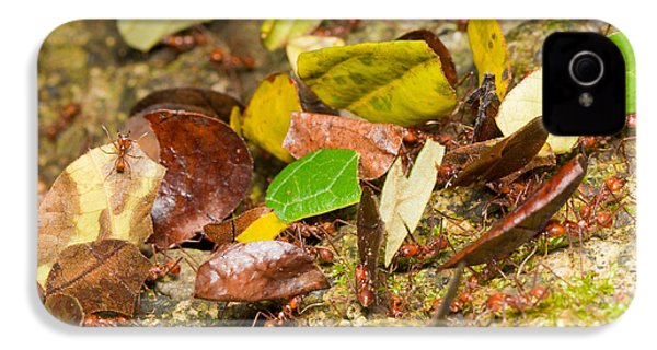Leaf-cutter Ants IPhone 4 Case by B.G. Thomson