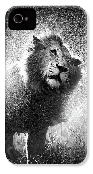 Lion Shaking Off Water IPhone 4 Case