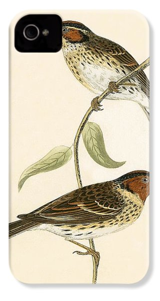Little Bunting IPhone 4 Case by English School