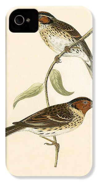 Little Bunting IPhone 4 / 4s Case by English School