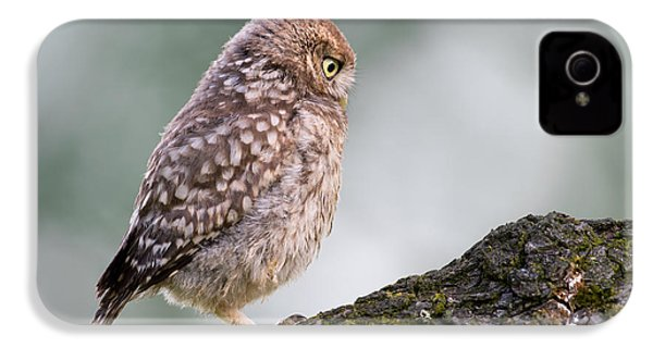 Little Owl Chick Practising Hunting Skills IPhone 4 Case by Roeselien Raimond