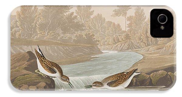 Little Sandpiper IPhone 4 / 4s Case by John James Audubon