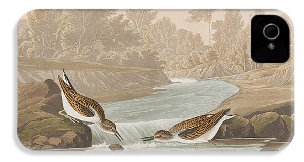 Little Sandpiper IPhone 4 Case by John James Audubon