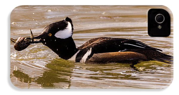 Lunchtime For The Hooded Merganser IPhone 4 Case by Randy Scherkenbach