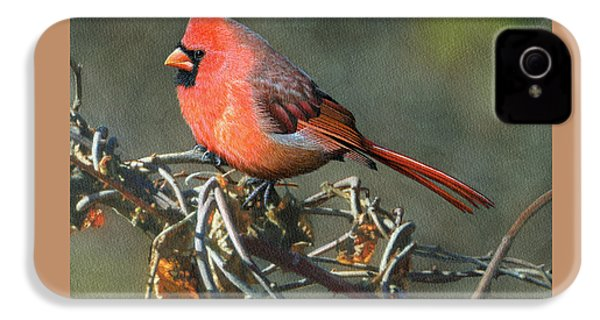 Male Cardinal IPhone 4 / 4s Case by Ken Everett
