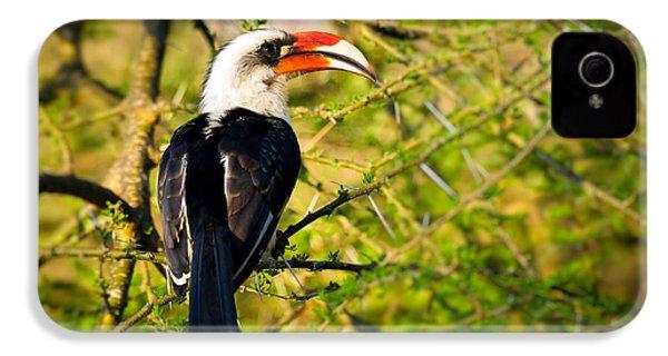 Male Von Der Decken's Hornbill IPhone 4 Case by Adam Romanowicz