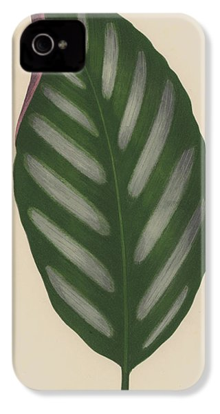 Maranta Porteana IPhone 4 / 4s Case by English School