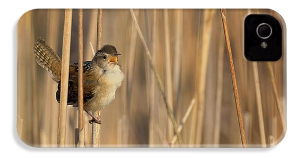 Marsh Wren Square IPhone 4 Case by Bill Wakeley