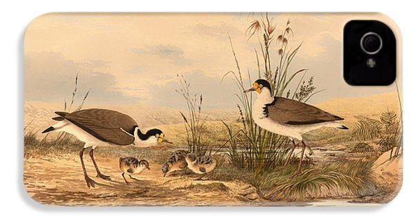 Masked Lapwing IPhone 4 Case by Mountain Dreams