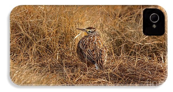 Meadowlark Hiding In Grass IPhone 4 / 4s Case by Robert Frederick