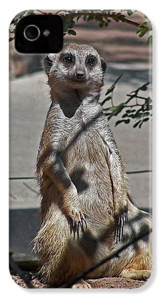 Meerkat 2 IPhone 4 Case by Ernie Echols