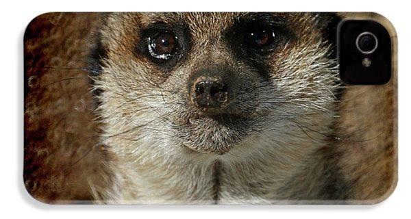 Meerkat 4 IPhone 4 Case by Ernie Echols