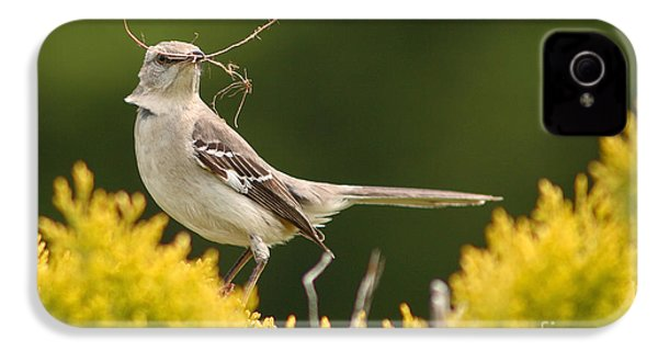 Mockingbird Perched With Nesting Material IPhone 4 Case by Max Allen