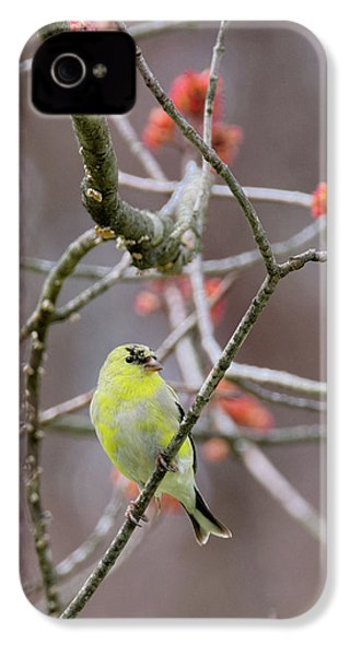 IPhone 4 Case featuring the photograph Molting Gold Finch by Bill Wakeley