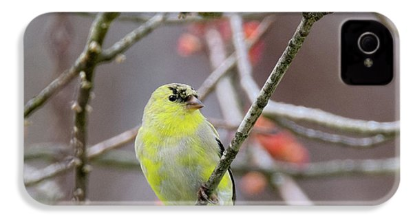 IPhone 4 Case featuring the photograph Molting Gold Finch Square by Bill Wakeley