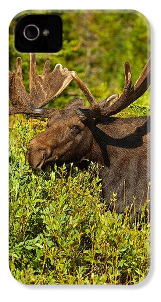 Moose IPhone 4 / 4s Case by Sebastian Musial