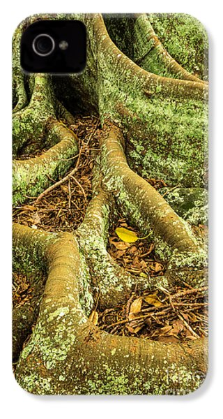 IPhone 4 Case featuring the photograph Moreton Bay Fig by Werner Padarin