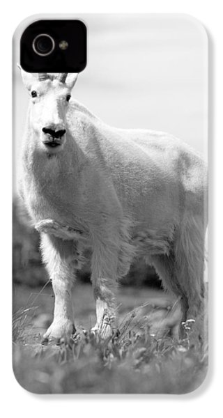 Mountain Goat IPhone 4 Case by Sebastian Musial