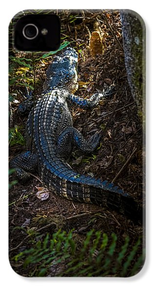 Mr Alley Gator IPhone 4 Case by Marvin Spates