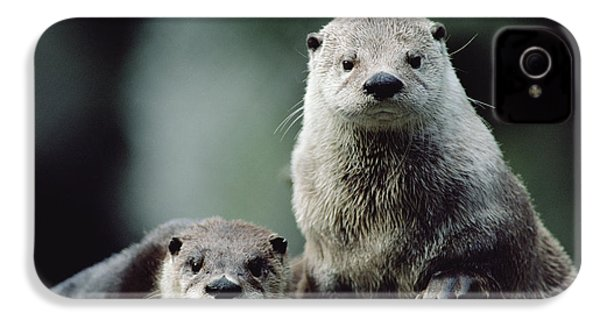 North American River Otter Lontra IPhone 4 Case by Gerry Ellis