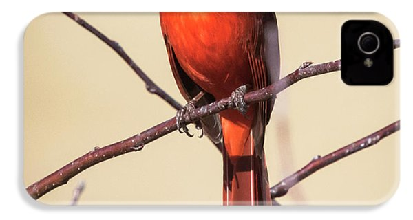 Northern Cardinal Profile IPhone 4 Case by Ricky L Jones