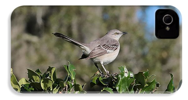 Northern Mockingbird IPhone 4 Case by Carol Groenen