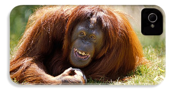 Orangutan In The Grass IPhone 4 Case by Garry Gay