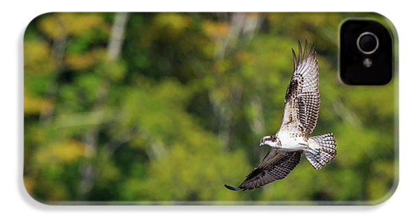Osprey IPhone 4 / 4s Case by Bill Wakeley