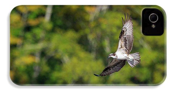 Osprey IPhone 4 Case by Bill Wakeley