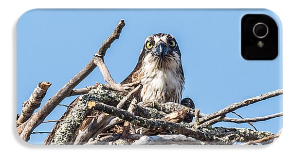 Osprey Eyes IPhone 4 / 4s Case by Paul Freidlund