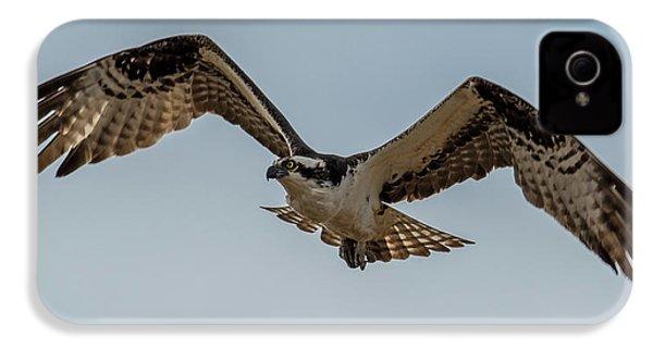 Osprey Flying IPhone 4 Case by Paul Freidlund