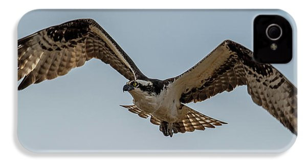 Osprey Flying IPhone 4 / 4s Case by Paul Freidlund