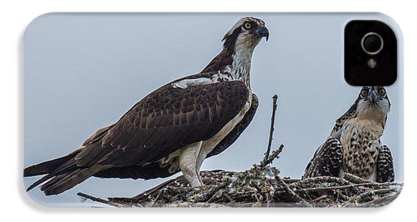 Osprey On A Nest IPhone 4 Case by Paul Freidlund