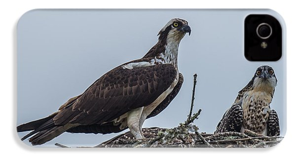 Osprey On A Nest IPhone 4 / 4s Case by Paul Freidlund