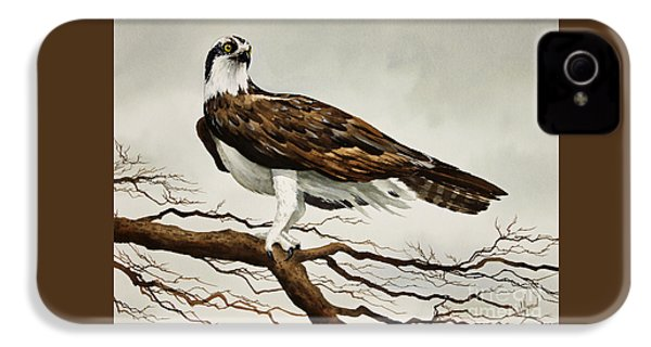 Osprey Sea Hawk IPhone 4 Case by James Williamson