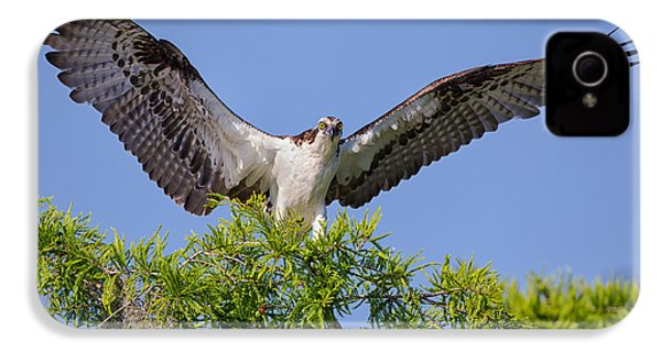 Osprey With Wide-open Wings IPhone 4 Case