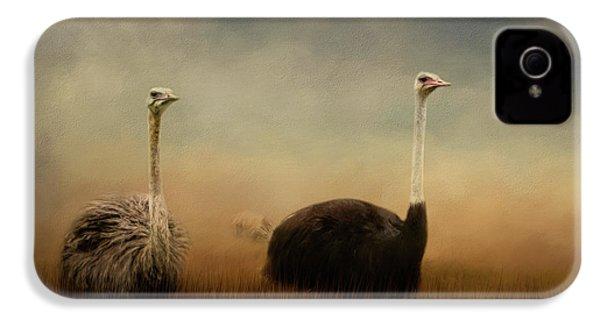 Ostrich Couple IPhone 4 Case by Jai Johnson